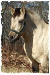 馬のプロフィール